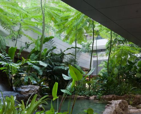 La natura che cura. Il verde negli ospedali