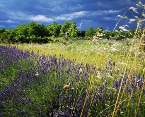 Credo nella floricoltura sostenibile