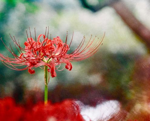 L'ikebana e lo sguardo neutro